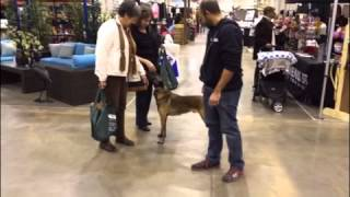 Puppy Training Houston Texas Home Show