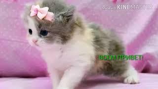 Обзор очень милых и няшных котят.Какой котёнок тебе понравился больше всех?