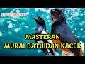 Masteran Kacer Dan Murai Batu Terbaik   Mp3 - Mp4 Download