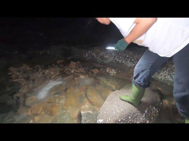 岛坑里形成一个鱼窝,皮皮下去发现异常凶猛的大货,抓得冷汗直冒
