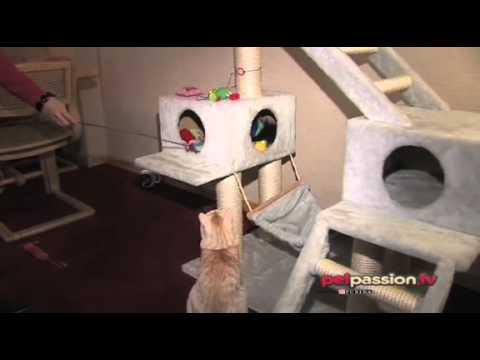 Comportamento gatti tiragraffi e cuccia youtube for Tiragraffi gatti ikea