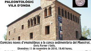 espcies noves d equinodeus a la conca sedimentria del maestrat enric forner i valls 2016