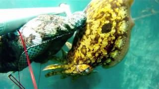 Pesca submarina en La Coruña, Prioriño y Mirandas .m4v
