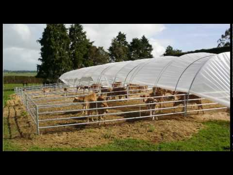 calf rearing Calf rearing is an important job on the farm remember the young calf is the future of your herd well reared, healthy calves will produce high yielding,.