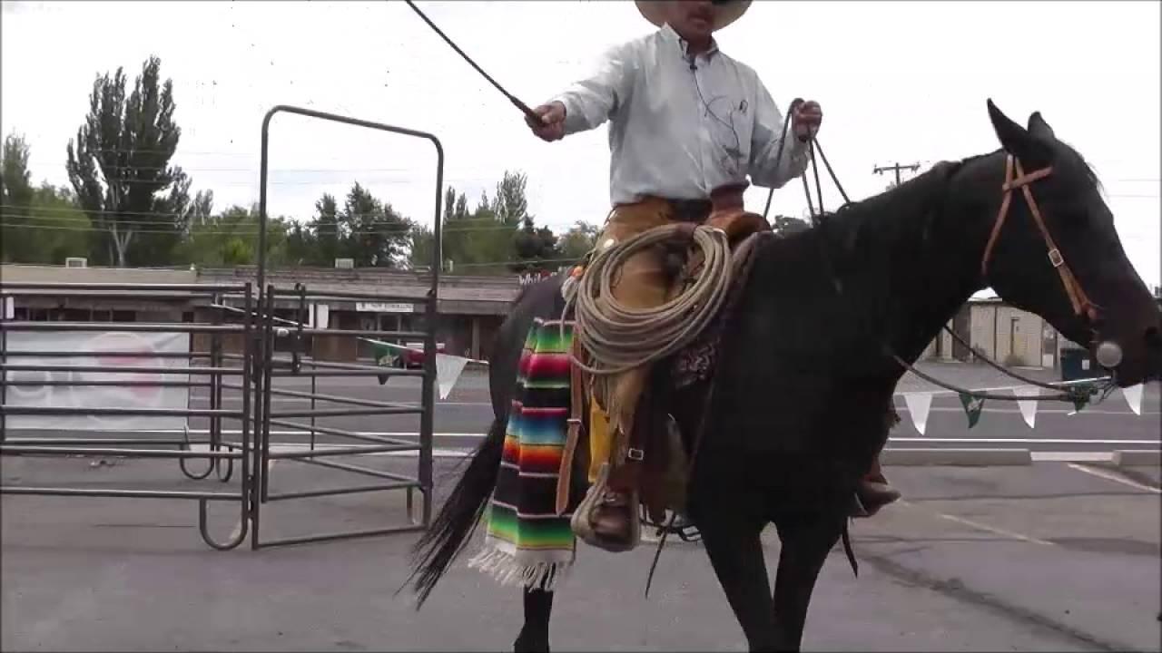 Vaquero