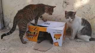 homeless cats in egypt