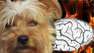 Инсульт у собак | Симптомы | Лечение | Признаки.(, 2016-01-16T17:01:29.000Z)