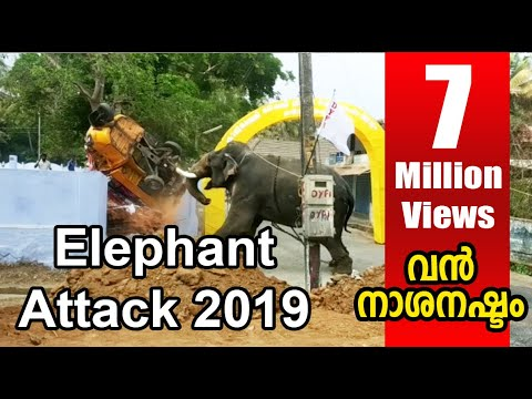 elephant attack kerala 2019 april kuzhalmannam - YouTube