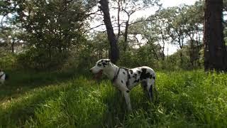 Perros en realidad virtual   Episodio #38