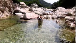 今年も暑い季節の川遊びが始まった。