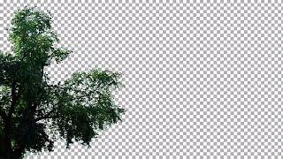 Tree Swaying Left Frame Stock Video