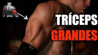 Rutina de TRÍCEPS GRANDES - (Con 10 Ejercicios Más Eficientes) thumbnail