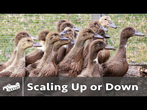 Decision To Scale Your Farm Up Or Down