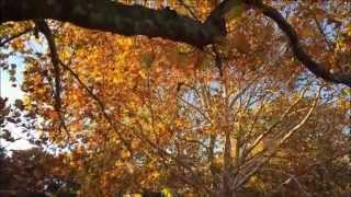 Autumn leaves of Showa Kinen Park at Tachikawa-Shi, Tokyo