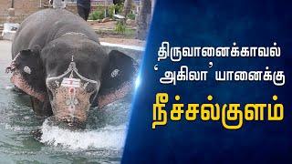thiruvanaikaval-akila-elephant-story-hindu-tamil-thisai