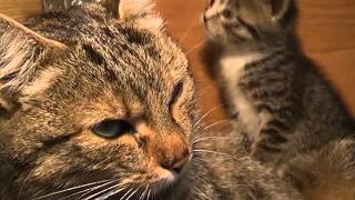 Котята в добрые руки от телеканала Видное ТВ