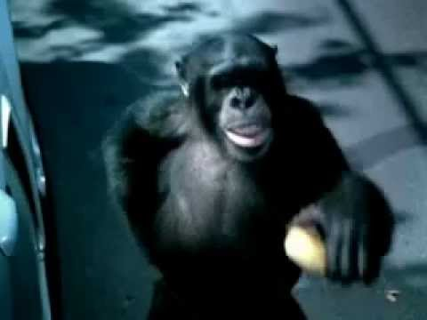 Trunk monkey videos dating