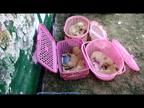 Dog Market Part 3 with Phone number and Address.. MB- 9728011133,9319811881 -DOGGYZ WORLD