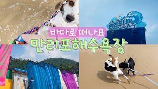 애견동반여행 | 태안 만리포해수욕장 | 강아지산책이 가…