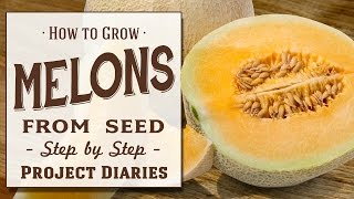 ★ How to: Grow Melons from Seed (A Complete Step by Step Guide)