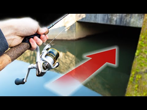BIG FISH Live In Unexpected Places! Micro Stream Fishing