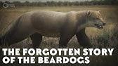 The Forgotten Story of the Beardogs