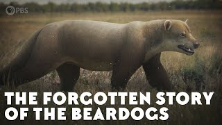 The Forgotten Story of the Beardogs