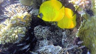 Tutti i colori del Mar Rosso - La barriera corallina - Parte seconda