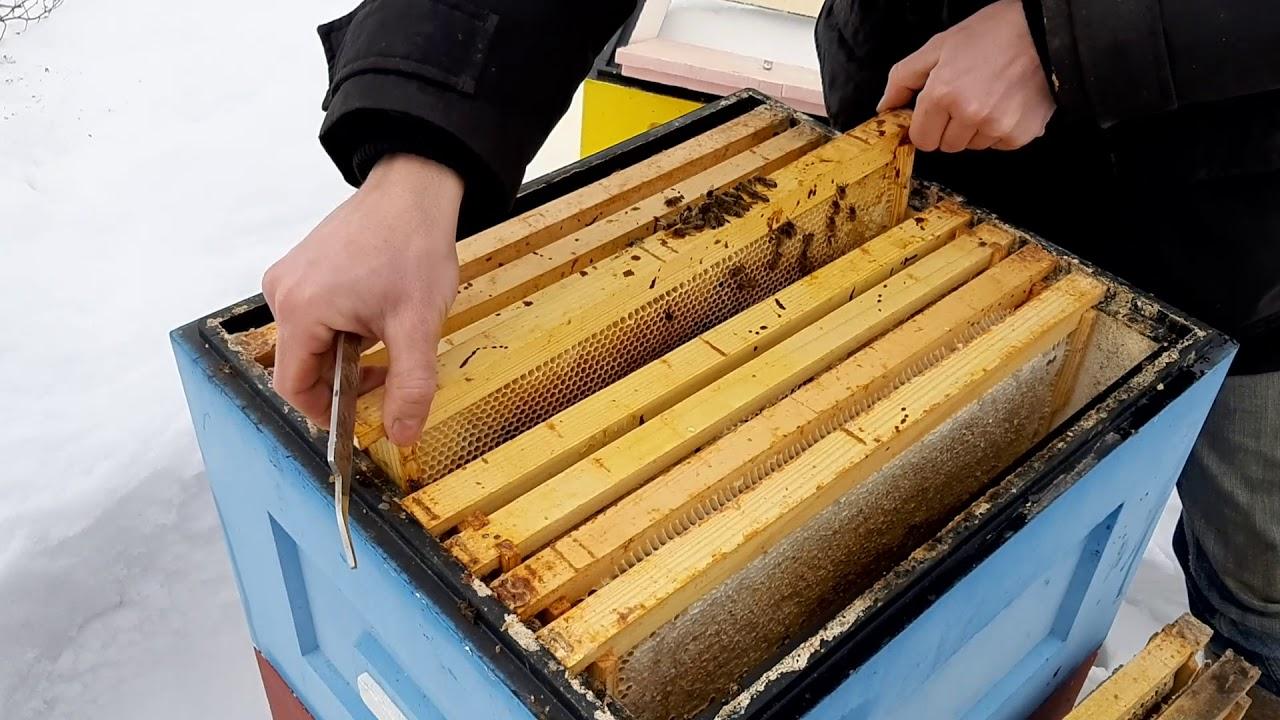 Разбор,  почему погибла пчелосемья