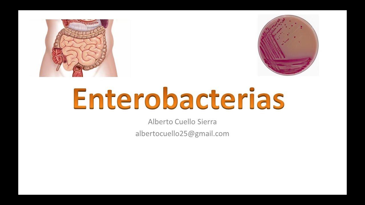 bacterii lactozo pozitive papilloma invertito fossa nasale