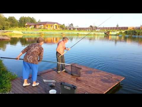 Золотой карась рыбалка в огуднево