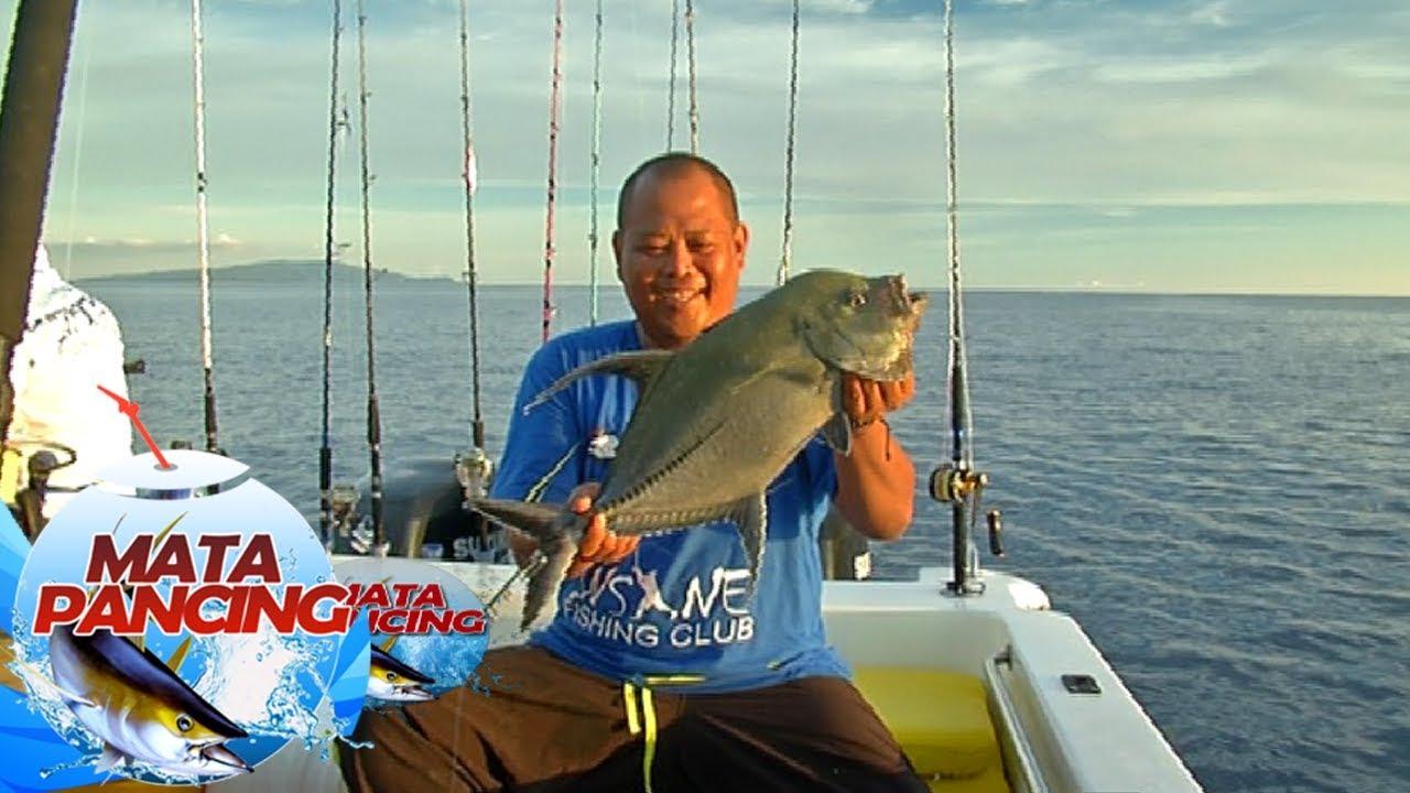 predator laut dangkal bergerombol mata pancing 5 8 youtube rh youtube com