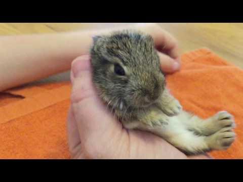 Bottle Feeding A Baby Bunny