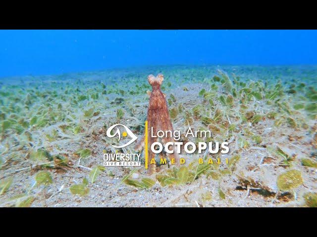 The Long Arm Octopus roaming his territory.