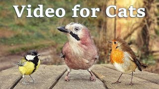 Videos for Cats to Watch  8 Hour Bird Bonanza