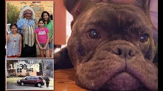 Texas family wants stolen pet dog Smokey to be returned for Christmas - Daily News