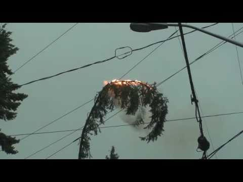Tree Limb Explosion Overhead Electrical Lines