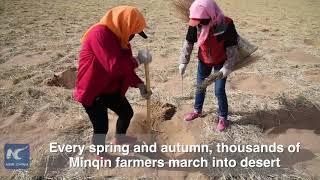 60 years of hard work turns desert into oasis