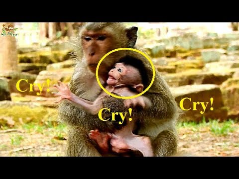 Much Pity Poor Baby Barbie Cry Angry Mom Not Give Him To Walk | Why Blaky Feedeth Her Baby Wrong?