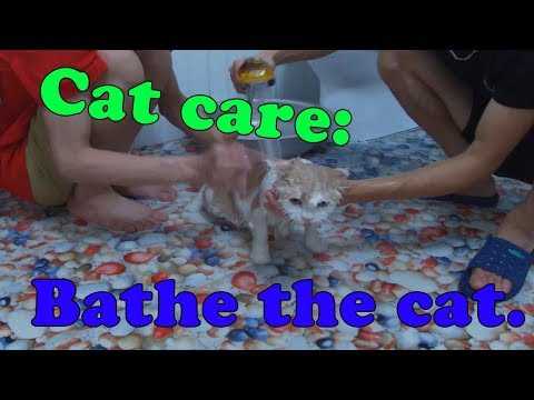 Cat care :  Bathe the mother cat