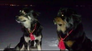 Бурят-монгольская собака. Хотошо в зимнюю ночь!