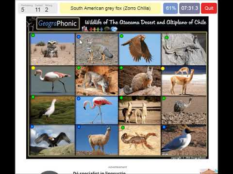 wildlife of Atacama Desert and Altiplano of Chile, chilean animals, game run