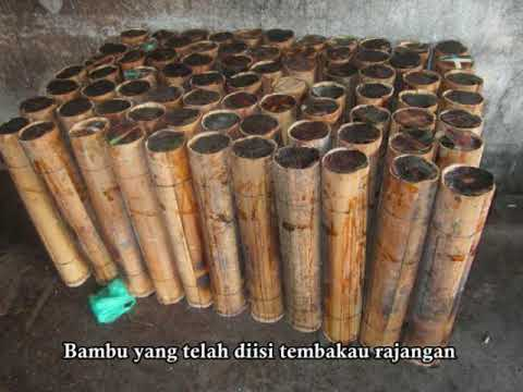 Tembakau (tobacco) Cabbenge_Kec. Lilirilau, Kab. Soppeng, Prov. Sulawesi Selatan