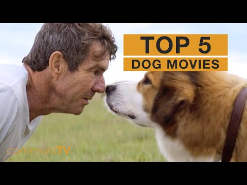 TOP 5: Dog Movies [live action]