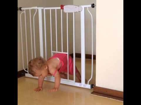 Baby Gate With Pet Door: FAIL