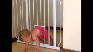 Baby Gate With Pet Door: Fail