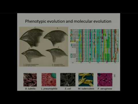 Long-term phenotypic evolution of bacteria