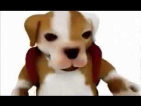 SUS AMIGOS Y DESCARGAR CHACARRON DE VIDEO