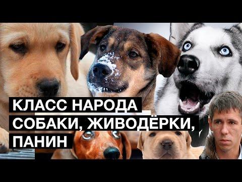 Политика России сегодня видео