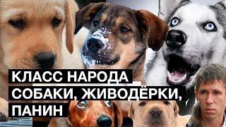 Класс народа. Хабаровские живодёрки, видео Панина и собаки